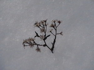 hartwick-pines